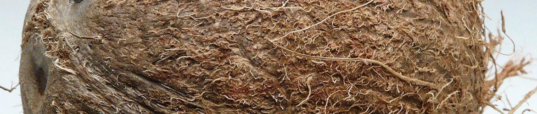 Logge Circulair Kokos Materialen